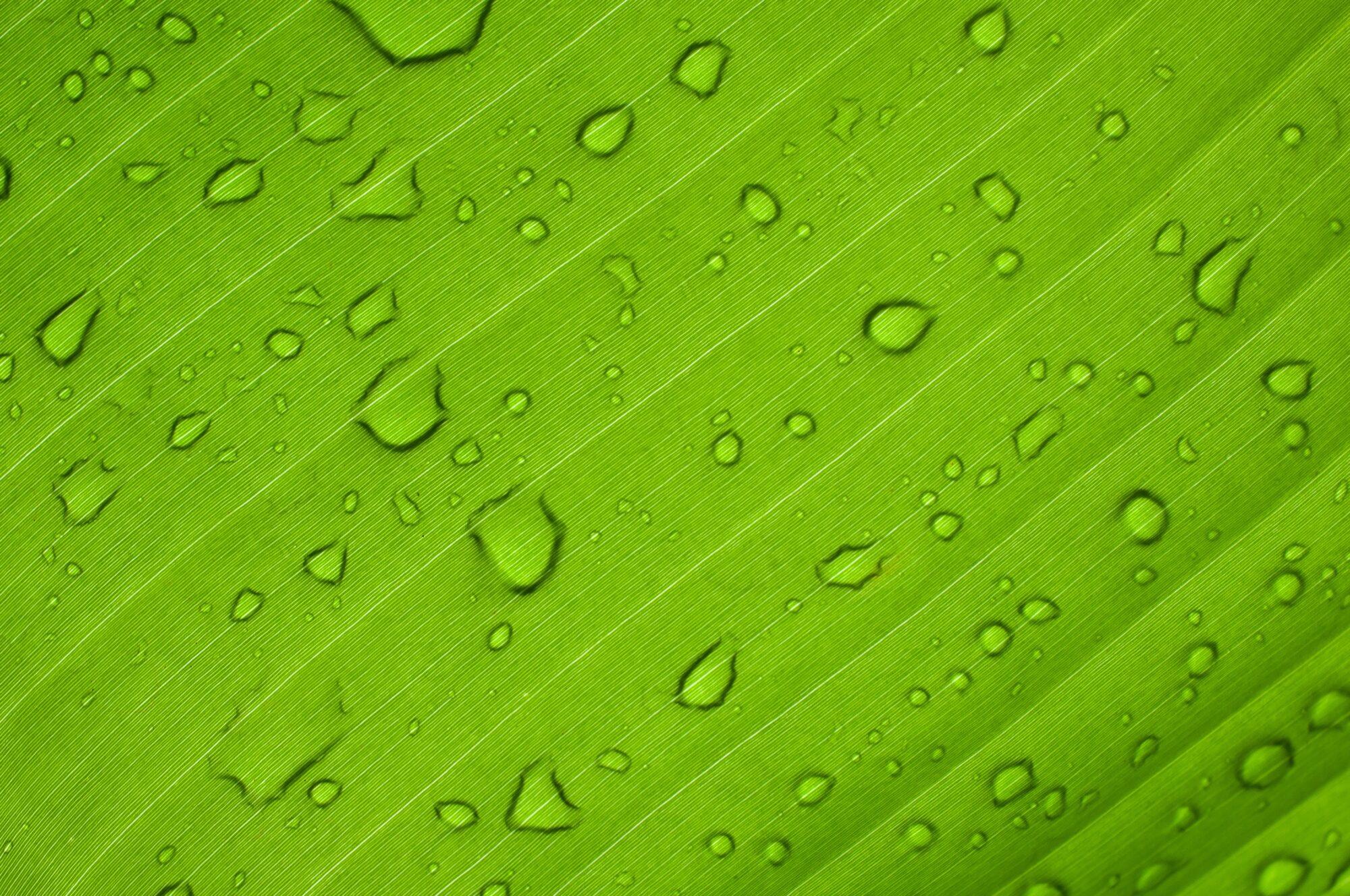EcoRise Joins Austin Green Business Leaders